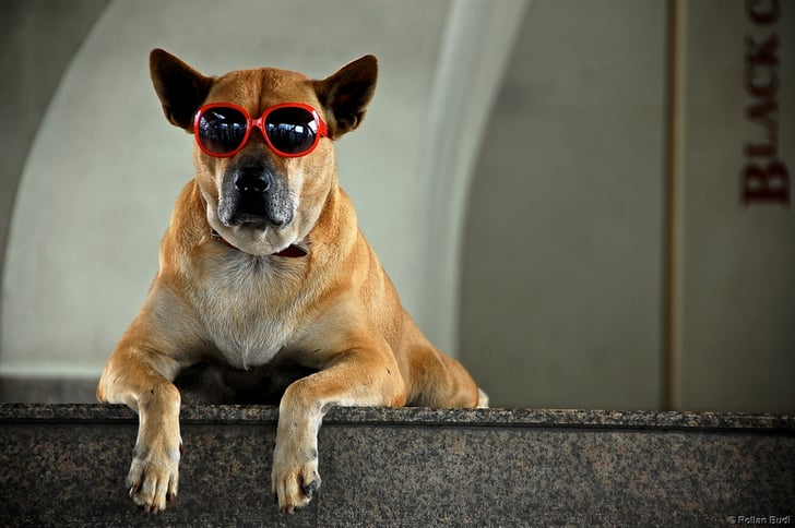Top Dog: Popular Pup Names and Their Meanings