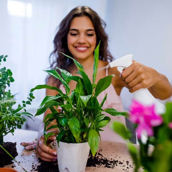 نصائح سهلة للعناية بالنباتات