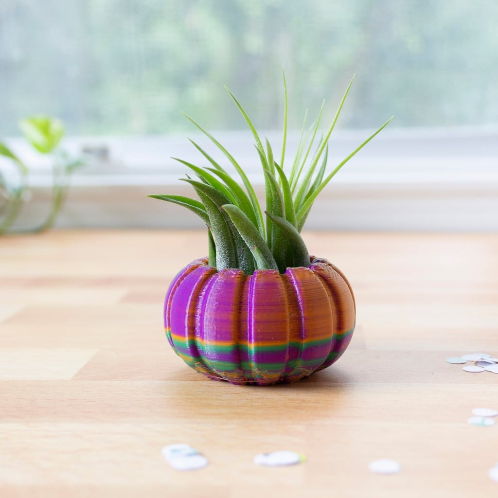 Pumpkin Air Plant Holder