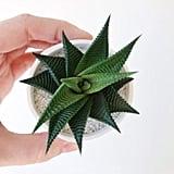 Alejandro Plant and Handmade Ceramic Planter