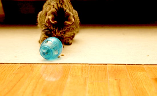 Can a Puzzle Feeder Make My Cat Less of a Jerk? Maybe