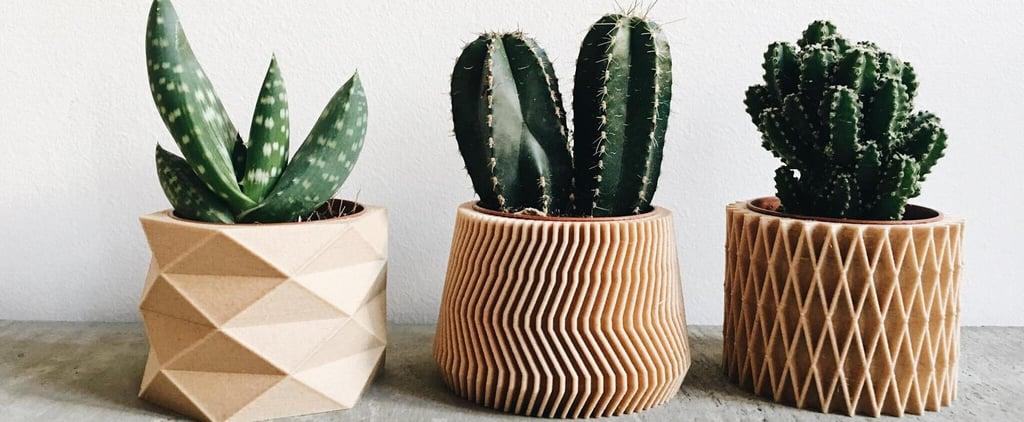 Best Pots For Succulents