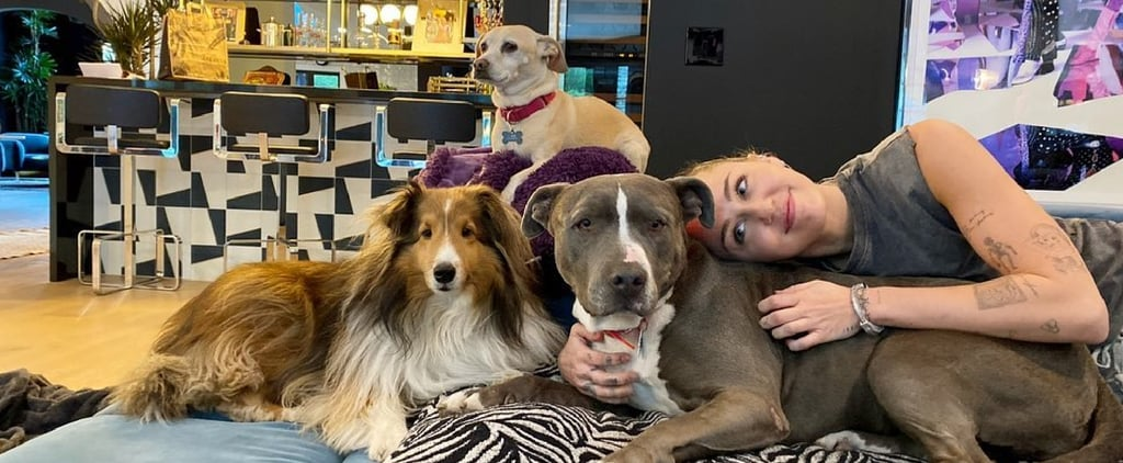 Miley Cyrus Rescues Pit Bull Named Angel | February 2021