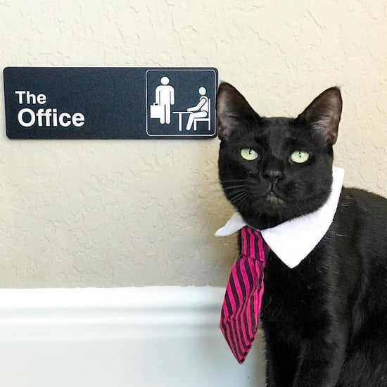 Fans of The Office Are Loving This Cat Named Michael Scott