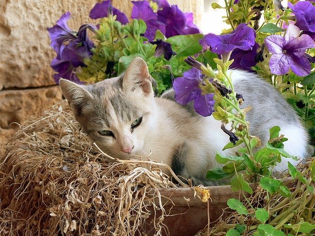 I thought you said it was a flowerbed?  Source: Flickr user lostajy
