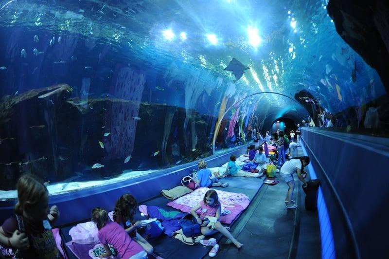 Image result for Georgia Aquarium, Atlanta, Georgia