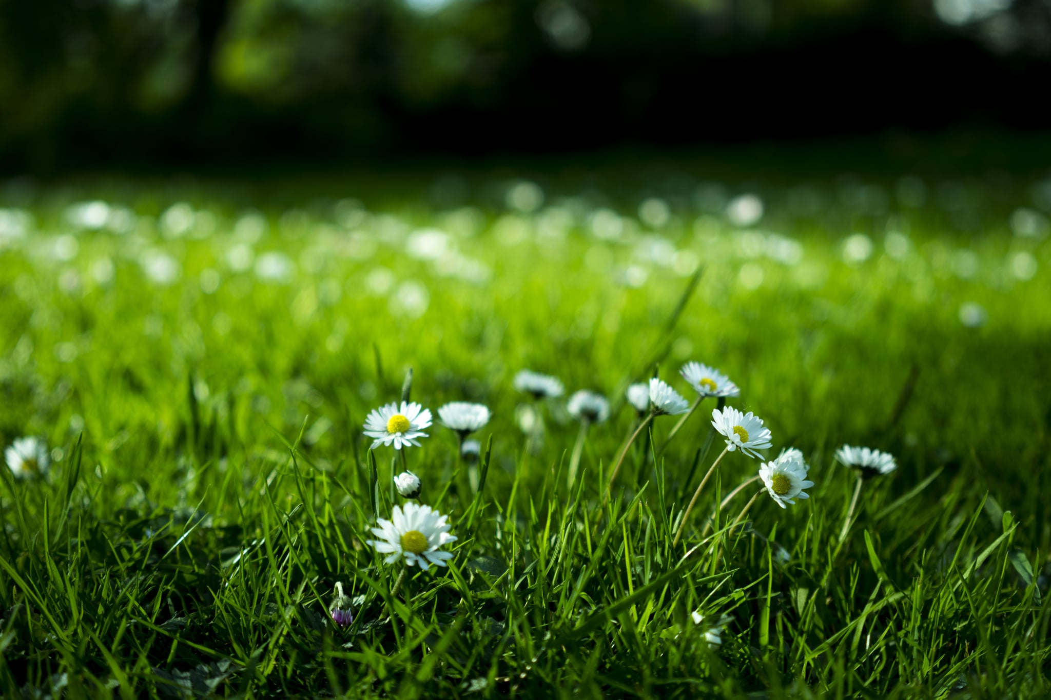 How To Get Rid Of Weeds Without Killing Your Lawn Popsugar Home