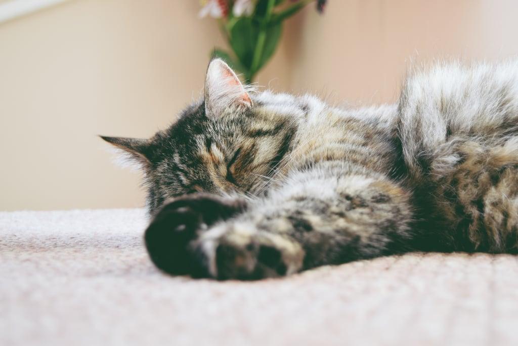 Take regular naps.