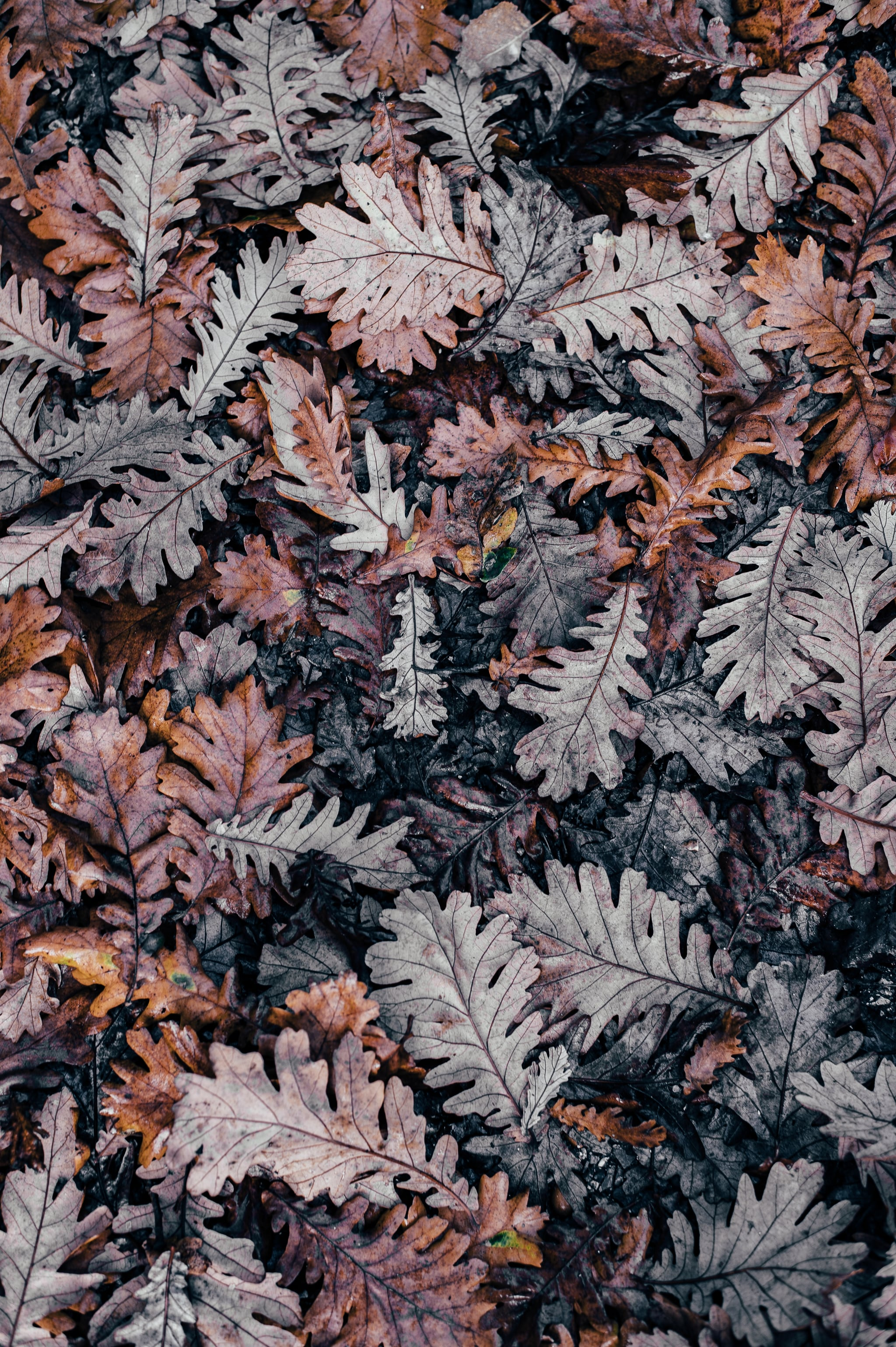 Best Ios 14 Fall Wallpapers For Your Home Screen Aesthetic Popsugar Tech