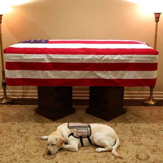 George H.W. Bush's Service Dog Sully Lying Under His Casket