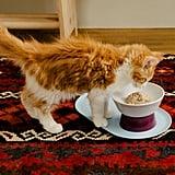 Cat Person Mesa Bowl