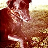 HR Generalist Lee Phillips's Labrador-Pointer mix, Zeke, looks camera-shy despite being superhandsome!