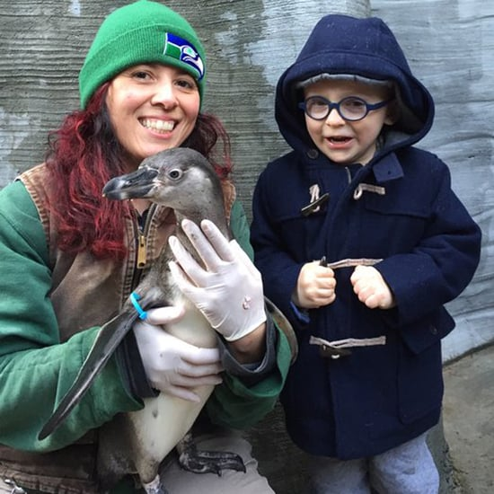 Chris Pratt and Anna Faris's Son Meets Eagle the Penguin
