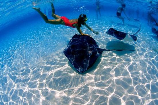 Spotlight: Hubbs-SeaWorld Research Institute