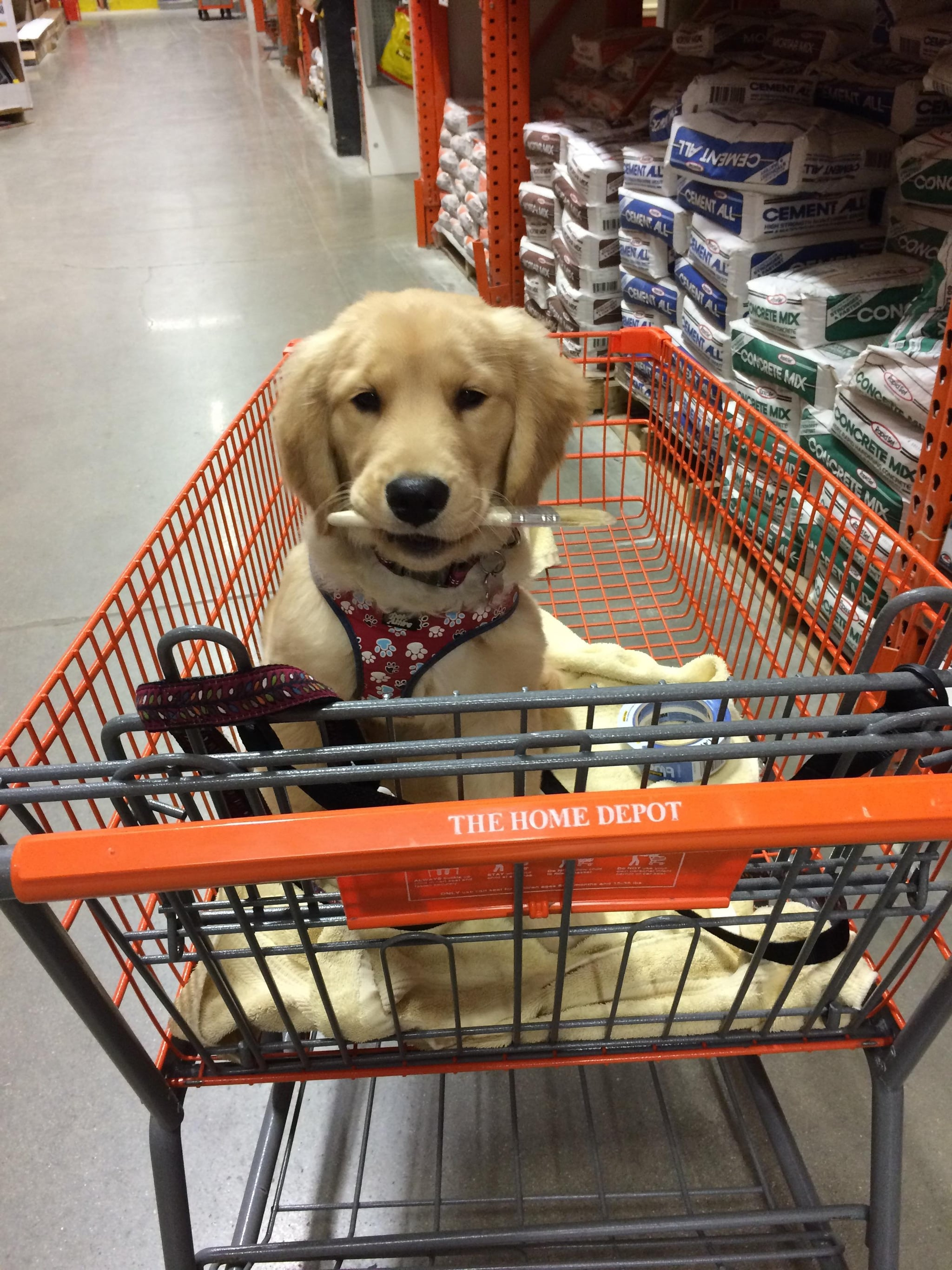Stores That Allow Dogs | POPSUGAR Pets