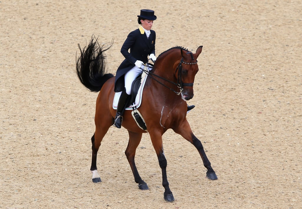 Italian Saddle Horse Horse Breeds And Types In Olympic