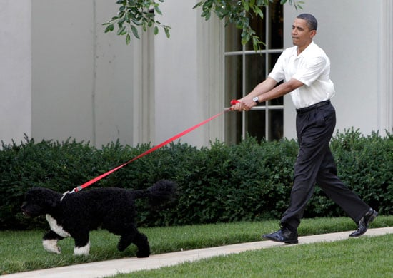 Pictures of President Obama's Dog at the Congressional Picnic
