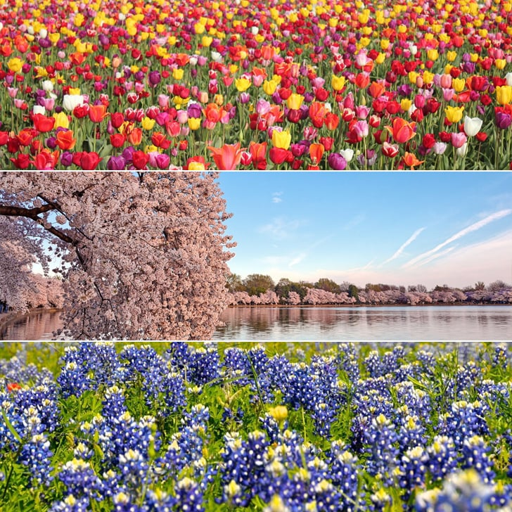 Best Places to See Flowers in America