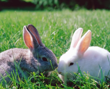How Much Does Animal Testing Matter to You?