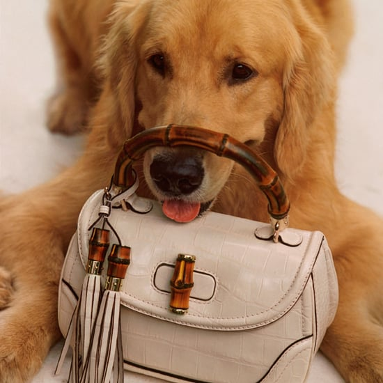Puppies and a Princess Star in Adorable Gucci Bag Campaign