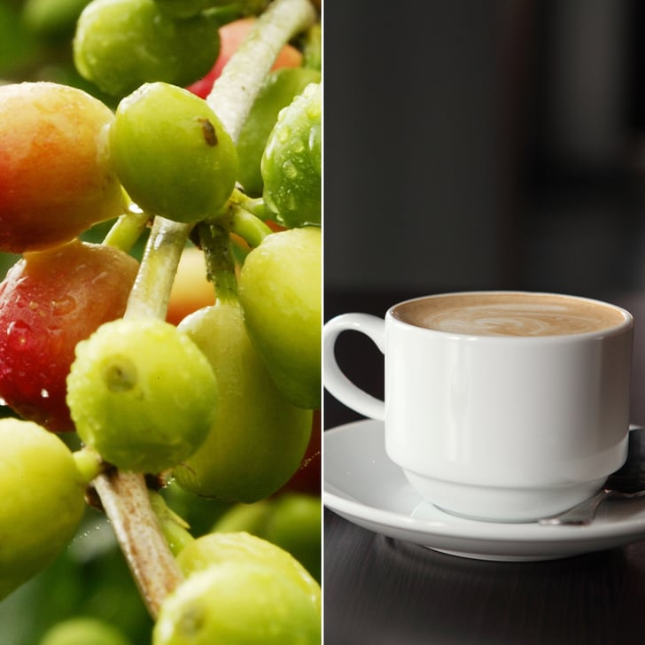 From Bean to Cup: The Story of Coffee Production