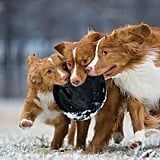 3rd Place, Dogs at Play, Sarah Beeson