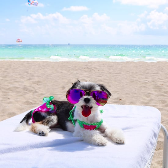 Tinkerbelle the Dog in Miami