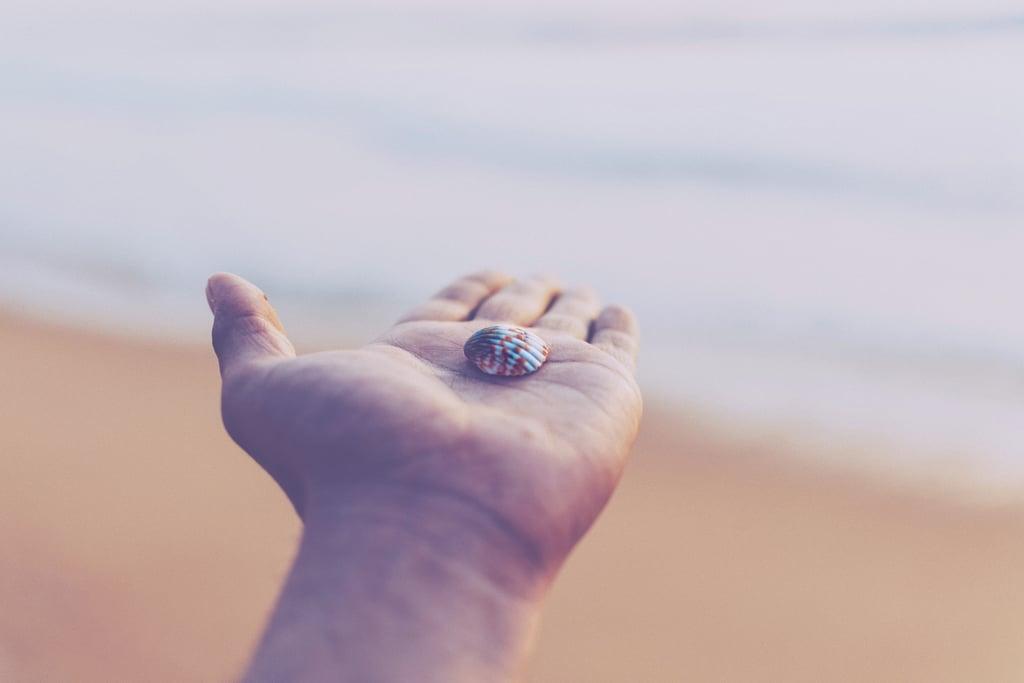 Collect seashells.