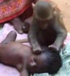Monkey Babysitter!
