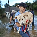 An animal rescue volunteer carries a dog out of the flood in Baton Rouge, LA.