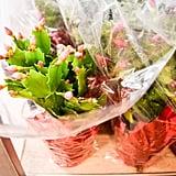 Holiday Zygocactus ($3)