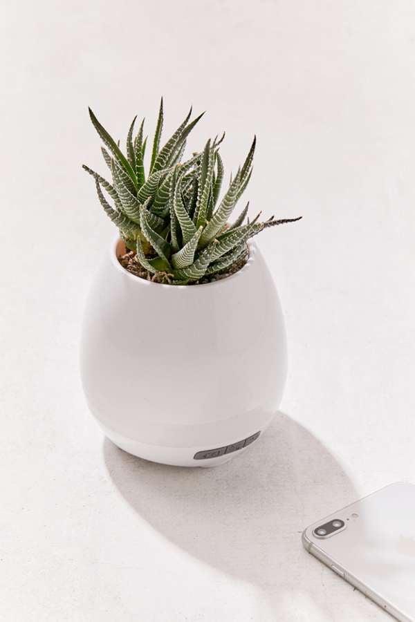 Faux Plant Bluetooth Speaker