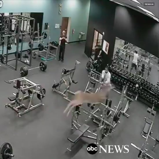 Deer Running Through Gym Video