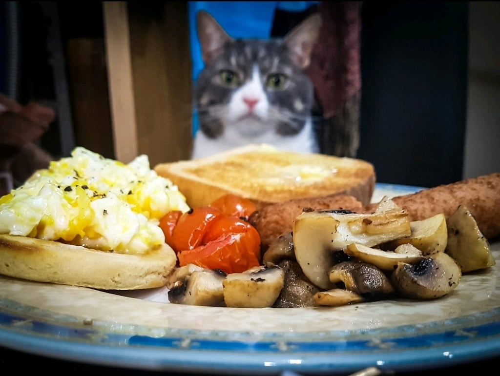 Photos of Man Eating Meals With His Cat