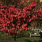 A woman sat on a bench near a red-colored tree in London's Kew Gardens.