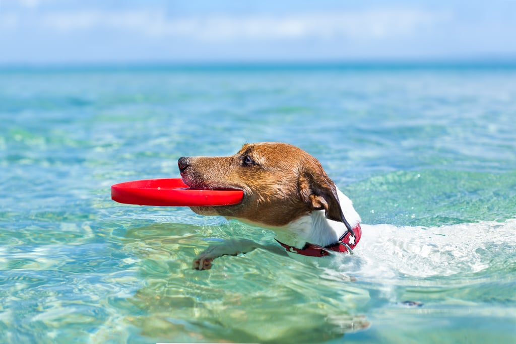 10 Fun Ways to Get Your Dog Ready For Summer