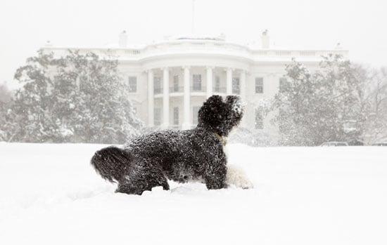 Sugar Shout Out: Bo Obama Takes a Bite Outta Snow