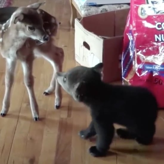 Baby Bear Kissing Deer GIF