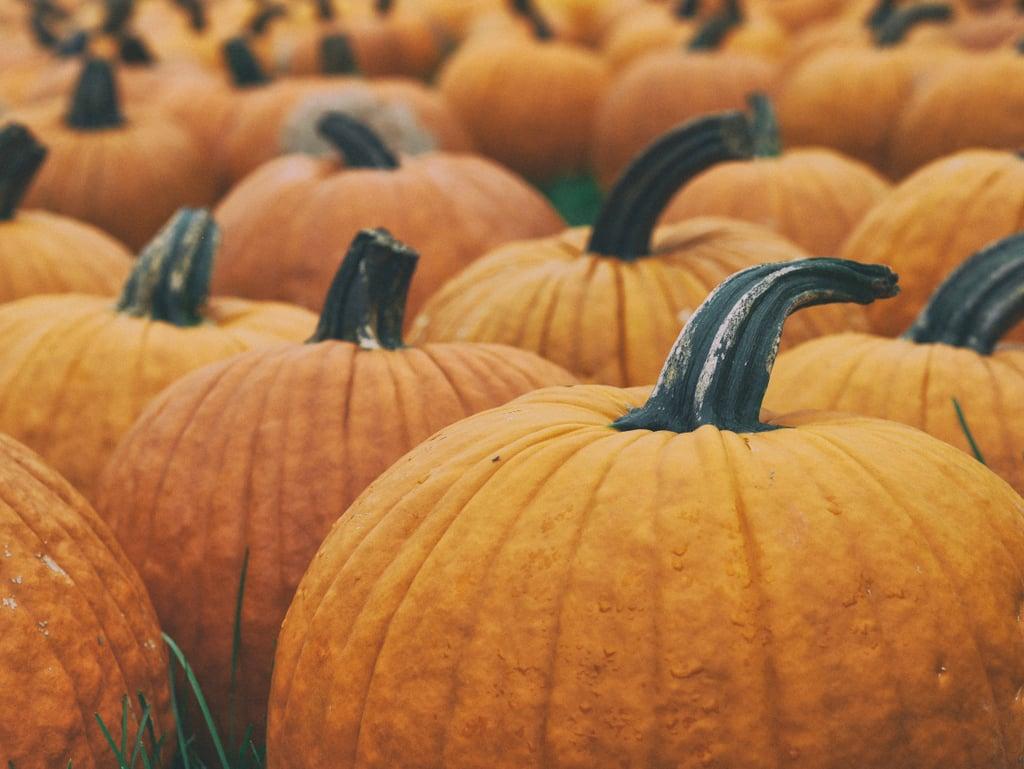 Visit a pumpkin patch.