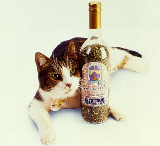 Is Your Cat Crazy For Catnip?
