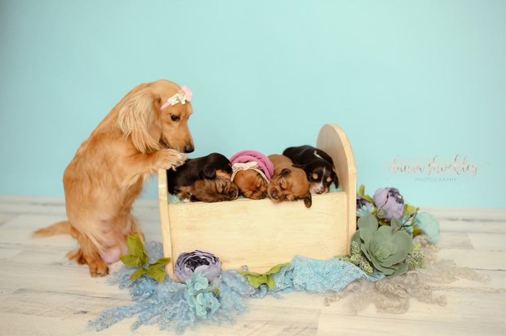 A Photographer Took Photos of Her Dachshund's Puppies, and It's Even Cuter Than Her Maternity Shoot