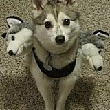 Cerberus Dog Costume