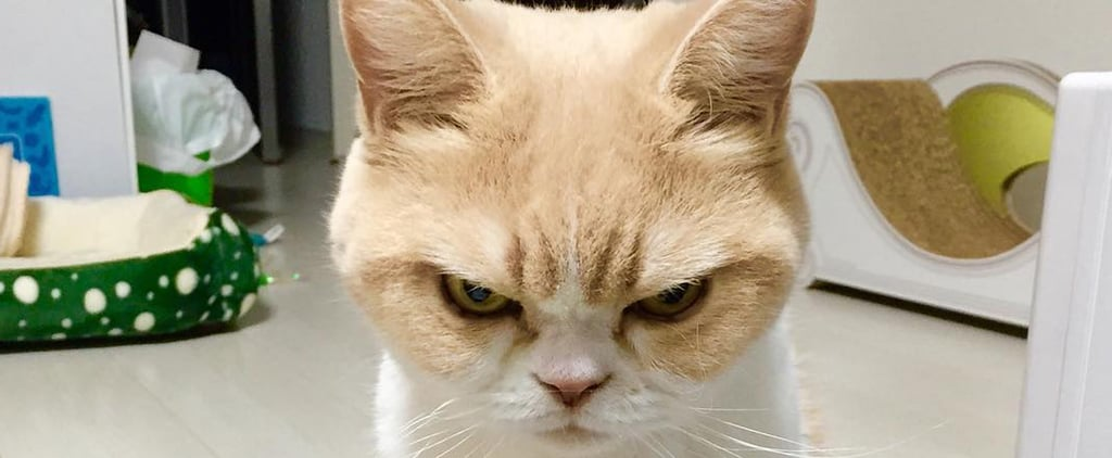 Koyuki, the Japanese Grumpy Cat
