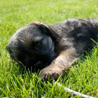 Guess What Breed Super Quiz: Terrier Puppy Edition!