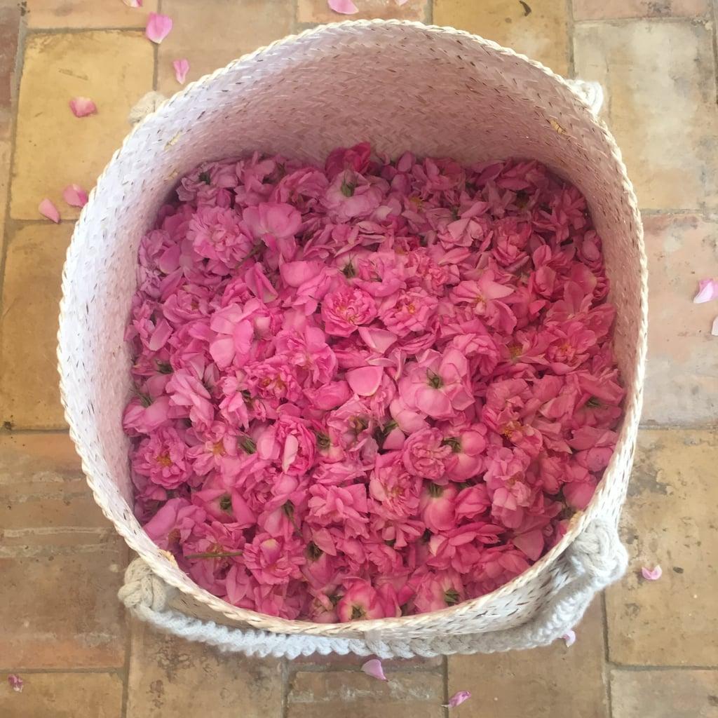 Basket of Freshly Picked Roses