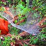 Spiderweb in the area Wasserfallen - BL - Switzerland