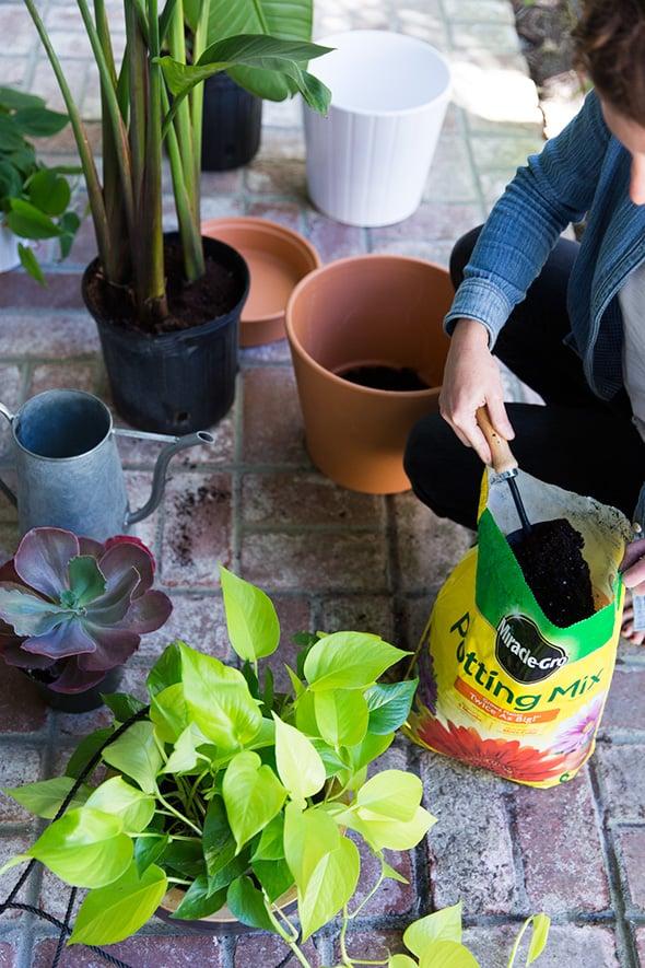 best houseplants for low light popsugar home uk