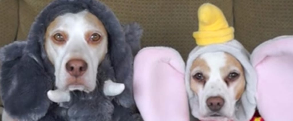Watch the World's Most Patient Dogs Try On 17 Halloween Costumes in This Adorable Video