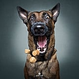 Dogs Catching Treats Photo Series
