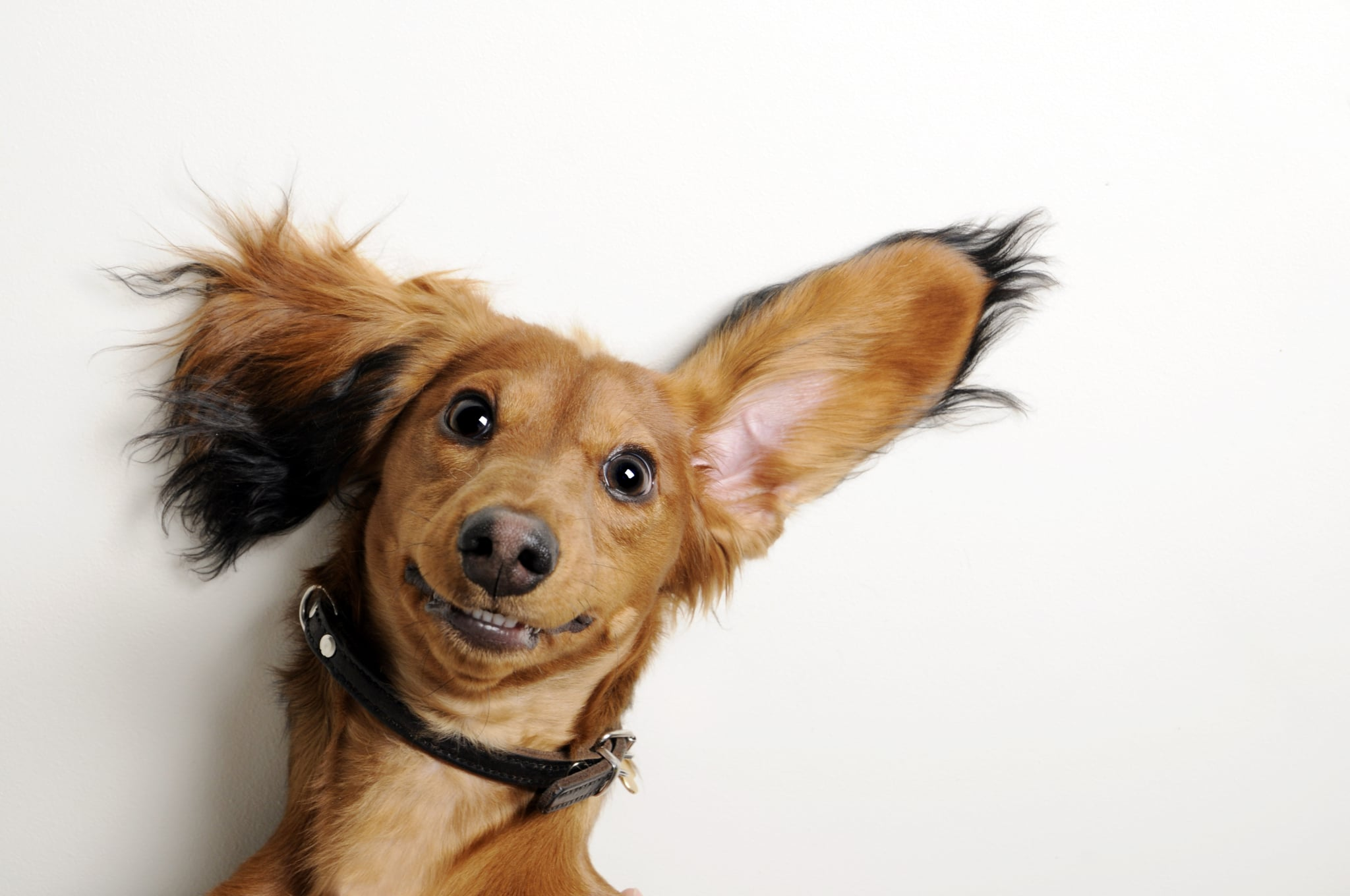 Pictures Of Dogs Making Funny Faces Popsugar Pets